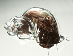 A Hermit Crab in a Glass Shell