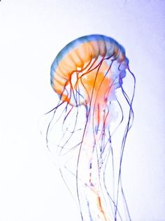 Water Color Jellyfish Art Print. Theyre so breathtaking and graceful..