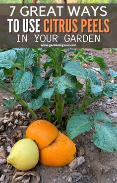 Eco Garden, Backyard Vegetable Gardens, Garden Compost, Garden Yard Ideas, Fruit Garden, Lawn And Garden, Garden Projects, Garden Plants, Garden Tips