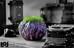 Lol From Holland A brand new concept now available in Canada and the USA LoL Madera cm Colorstorm Mistral soft feel Holland, Cabbage, Lol, Concept, Vegetables, Crib, Plants, Canada, Google Search