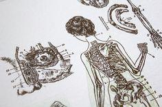 Illustrations by May Chua    #anatomy #skeleton #eye