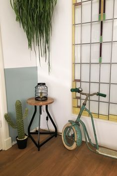 These cactus won't hurt you! #housevitamin#cactus