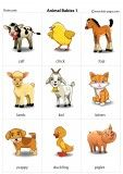 Flashcards Preschool Learning Activities, Toddler Learning, Animal Babies, Baby Animals, Letter Flashcards, Teaching Vocabulary, English Vocabulary Words, Kids Pages, Music And Movement