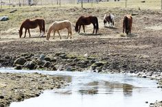 Best Environmental Practices For Your Horse Farm