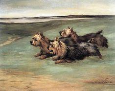 Australian Terrier Print