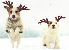 Look, I'm the new Rudolph