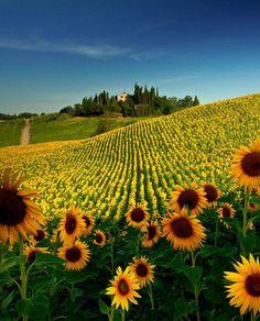 Val D'orcia Siena Tuscany Italy