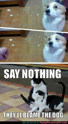 Funny Pictures 24/7 @ http://funnypictures247.com/post/funny-pictures-24/