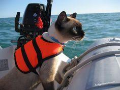 Bailey Boat Cat Con chaleco salvavidas!!!