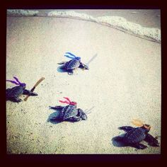 These baby turtles as ninjas: | If You Instagram Anything, It Better Be Adorable