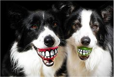 "From ""Rogz Grinz 