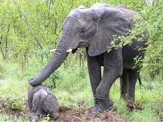oh my heart. .!! Credit : @karen.birkenbach -  A mother's touch For info about promoting your elephant art or crafts send me a direct message @elephant.gifts or emailelephantgifts@outlook.com  . Follow @elephant.gifts for inspiring elephant images and videos every day! . .  #elephant #elephants #elephantlove