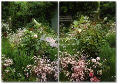 Oeillets, heuchères et roses pâles.  Photo © Hélène Flont‿ ◕✿