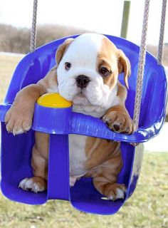 not a fan of bulldogs, but this is so cute!