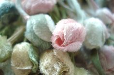velvet rosebuds