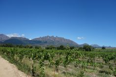 Kaapse wijnlanden