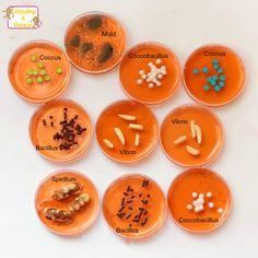 Edible Pitri Dish Bacteria: Bacteria You Won't Regret Eating!