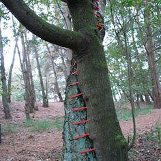 Tree Restoration, Hannah Streefkerk - part of a large scale installation at the Land Art Biennale 2010 Valkenswaard, Netherlands