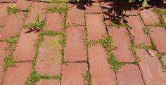 Une solution bio, rapide et efficace pour vous débarrasser des mauvaises herbes! Idéal pour les herbes qui poussent entre les dalles de béton, ou le long des trottoirs...