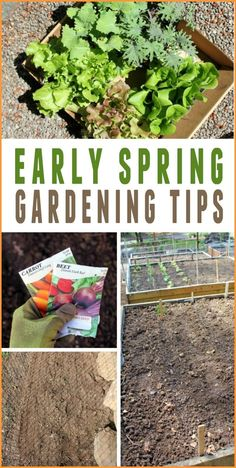 Container Gardening For Beginners Spring Gardening in the Pacific Northwest - diy gardening ideas. Learn how to start a garden for beginners - gardening tips - Diy Gardening, Organic Gardening Tips, Gardening For Beginners, Container Gardening, Vegetable Gardening, Gardening Supplies, Gardening Services, Organic Compost, Flower Gardening