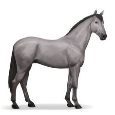 riding horse hanoverian mouse gray