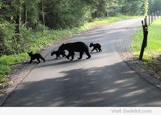 Bear Crossing. Smoky Mountains Hiking National Park Smokies Smokey