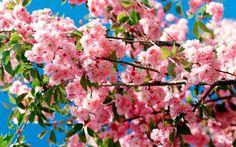 весна картинки природа - Поиск в Google