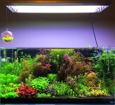 Aquarium Aquascape, Planted Aquarium, Aquascaping, Aquarium Landscape, Tropical Fish Aquarium, Aquarium Fish Tank, Cool Fish Tanks, Container Water Gardens, Aquarium Design