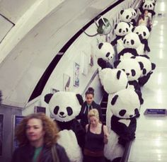 Ha/ I wonder what it would be like to be there! #pandacostumes #funny #airport