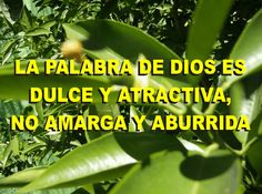LA PALABRA DE DIOS ES DULCE Y ATRACTIVA, NO AMARGA Y ABURRIDA