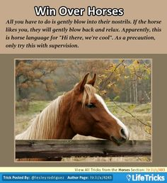 Win Over Horses || Use NOSE to breathe into their's and alternate each others' breath. But be careful, they might not react so nicely! Really works!