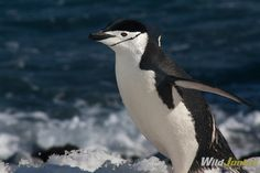 Antarctica in Photos: Icebergs, Glaciers and Penguins - Wild Junket