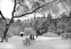 """Snøvinter i Byparken på tidlig 1900-tall. Fontenen """"Vandkunsten"""" er nedsnødd og ligner et juletre.... Foto: Olaf Andreas Svanøe - Universitetsmuséet i Bergen."""