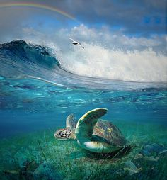 Sea turtles are fun little sea friends. Do you think he likes mermaids?