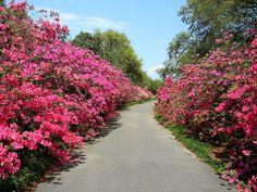 Bellingrath Gardens Mobile Alabama | Bellingrath Gardens 2011 | Flickr - Photo Sharing!