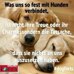 Beagle, Dog Love, Animals And Pets, Kurti, Labrador, Dog Cat, Training, Cats, Heart