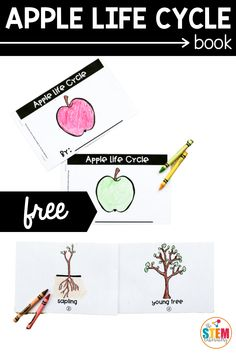 This creative and colorful apple life cycle book is the perfect project during a nature science unit or even during the fall months! #earlyscience #applelifecycle #apples Apple Activities, Autumn Activities, Literacy Activities, Math Literacy, Literacy Centers, Apple Life Cycle, Fall Months, Hundreds Chart, Life Cycles