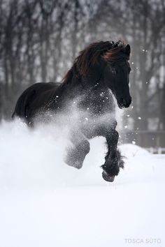 ♂ Wild life photography Animal black horse running in snow Photo by vadalein