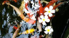 Hidden beautiful nature in ubud... more info 》》》》 www.luwakubudvillas. com