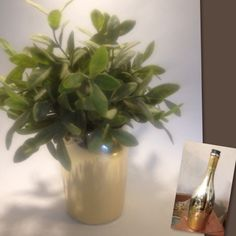 Fra Prosecco til blomstervase (lisewolden) Prosecco, Plants, Diy, Bricolage, Do It Yourself, Plant, Homemade, Diys, Planets