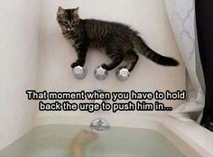 Funny, Memes, Pictures: that-moment-you-realize-that-if-he-falls-in-it-will-ruin-both-your-days