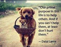 Altruism & Gifting