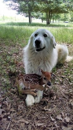 """A dog with a fawn...""""Please, please....can we keep him?!!"""""""