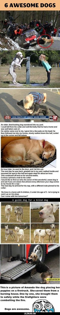Wonderful pics and story lines. I always wondered if one dog could walk another dog. It has now been answered.