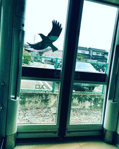 #window #portram #train #inside #bird #toyama