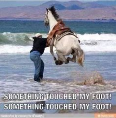 Funny Horse Quotes Touched My Foot - Return to Funny Animal Pictures Home Page Funny Horse Memes, Funny Horses, Funny Animal Quotes, Animal Jokes, Funny Animal Pictures, Cute Funny Animals, Cute Baby Animals, Funny Cute, Animals And Pets