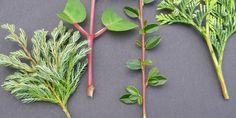 liste de boutures d'arbustes