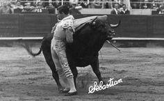 Pasándose al toro por la espalda, Gregorio Sánchez
