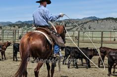 This is my favorite subject, in more ways than one. This is my husband, Eric Branger, heading back in the branding pen to rope another calf. My Favourite Subject, Irons, Calves, Horses, Photography, Animals, Baby Cows, Photograph, Animales