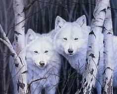 arctic-wolf-pictures